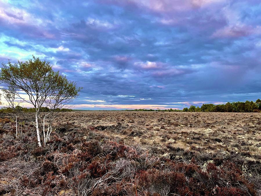 Purple Sky Photograph - Purple Hue Bog Sky by Six Months Of Walking