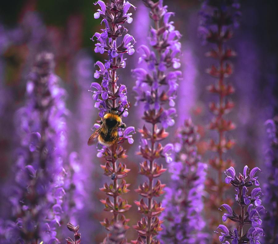 Purple Hue Photograph