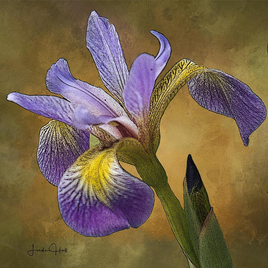 Flower Digital Art - Purple Iris by Linda Lee Hall