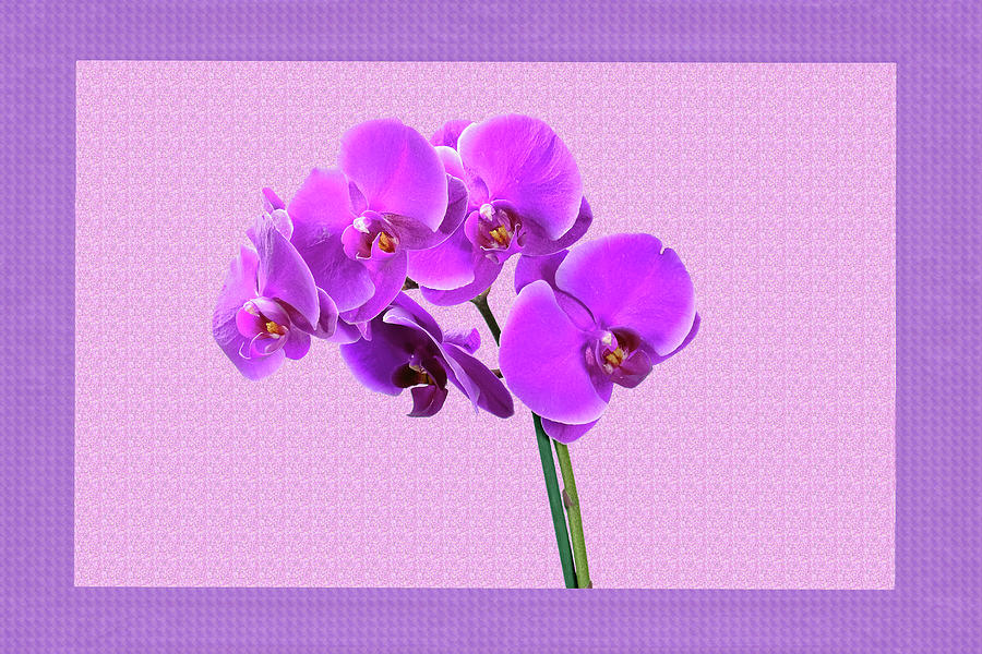 Purple Orchid Mixed Media
