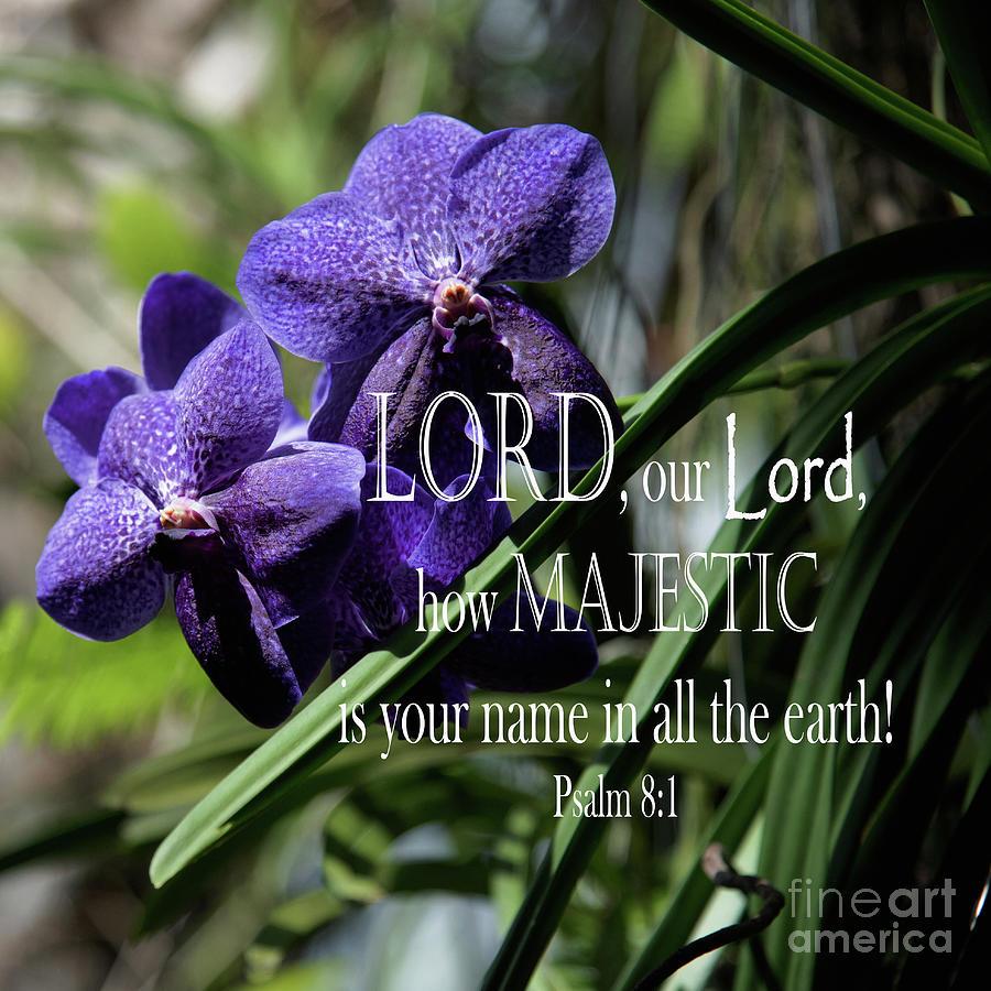 Purple Orchid - Verse Photograph