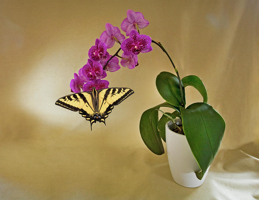 Purple Orchid With A Butterfly In A Vase Photograph