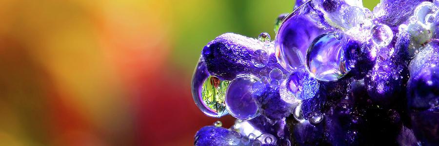Purple Rain Wide Format Photograph
