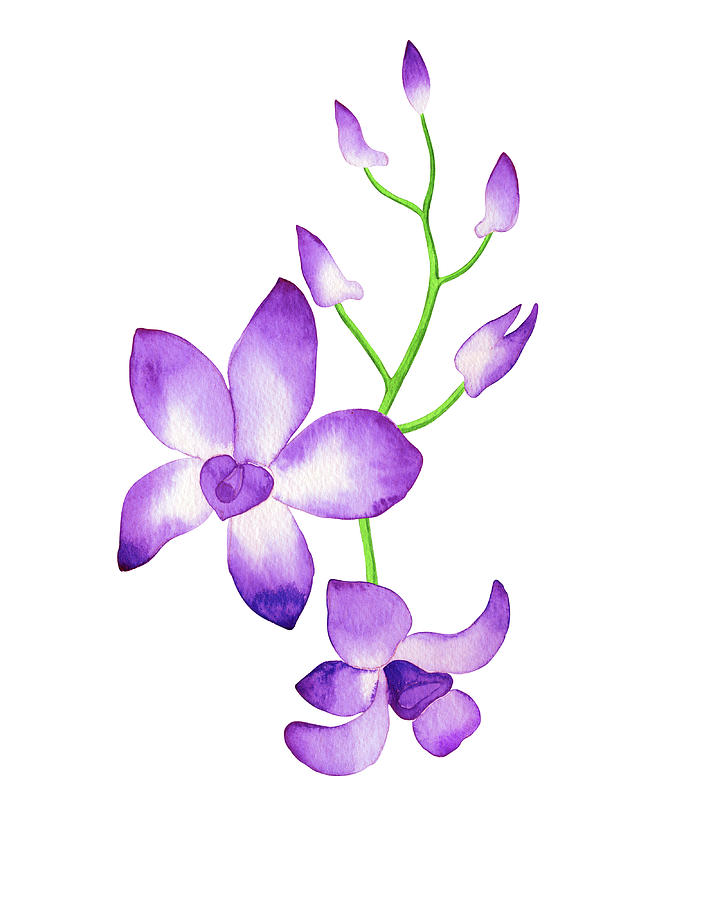 Purple Watercolor Orchid Flower With Stem And Buds Painting