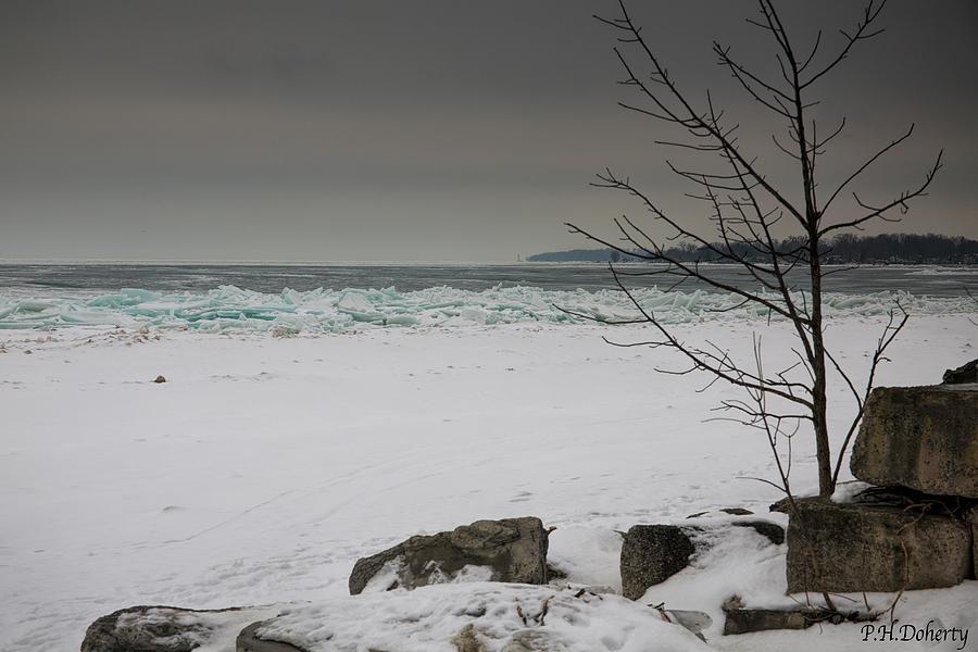 Pushed Ashore Photograph