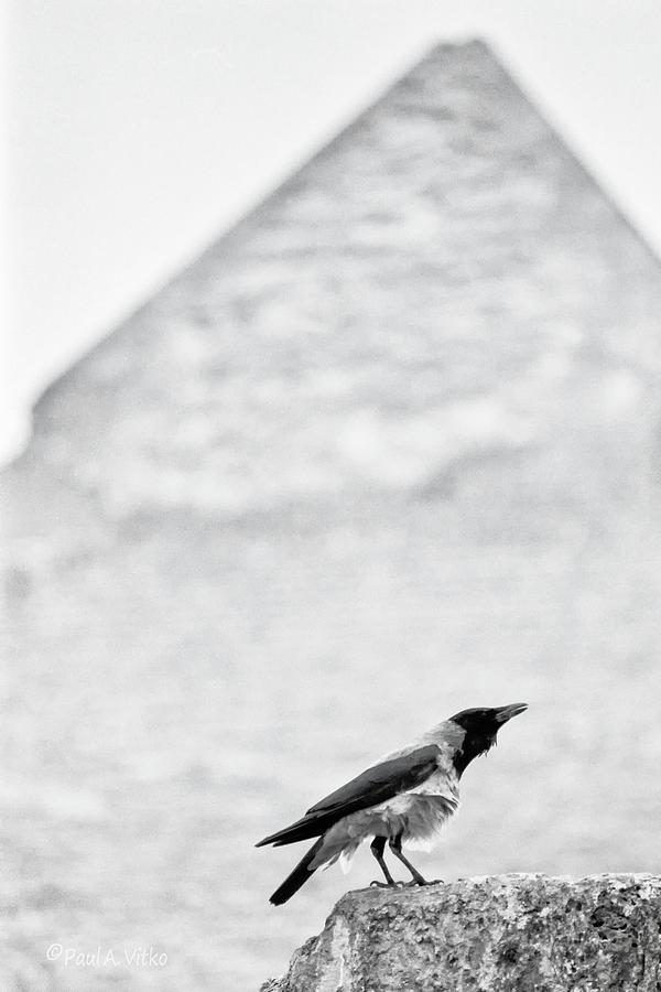 Bird Photograph - Pyramid bird by Paul Vitko