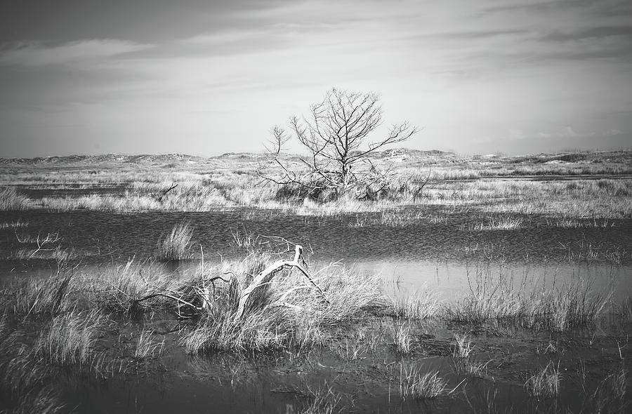 Quiet Stillness by Stacy Abbott