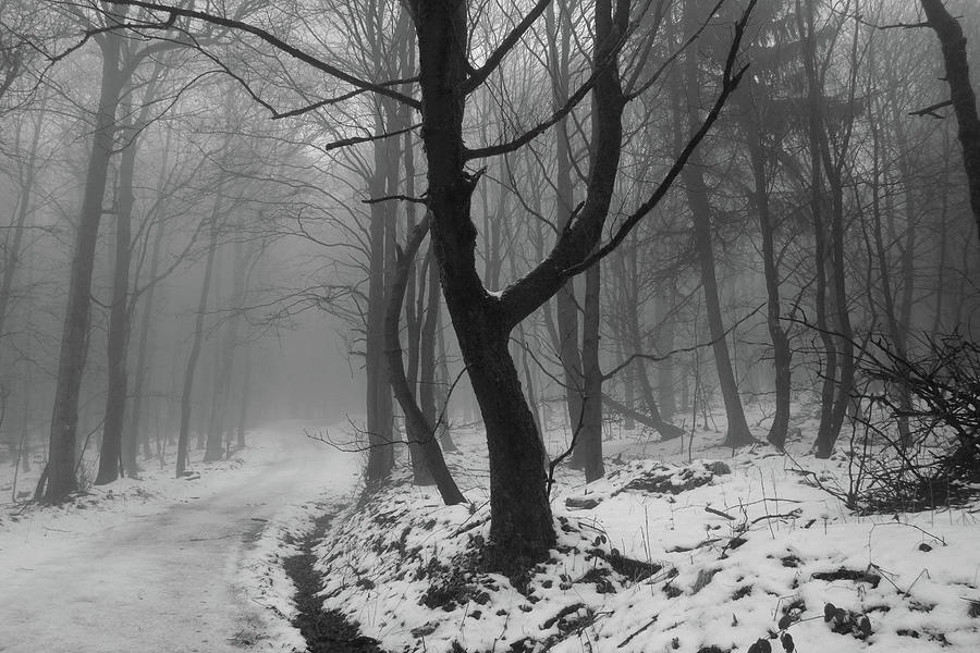 Quietness Hangs In The Snow And Mist Covered Woods Photograph