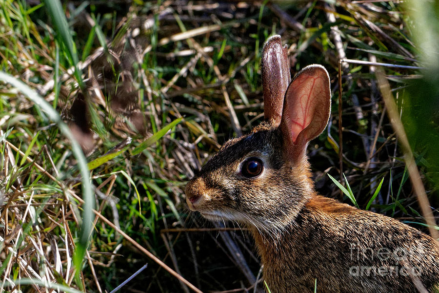 Rabbit Whiskers Photograph