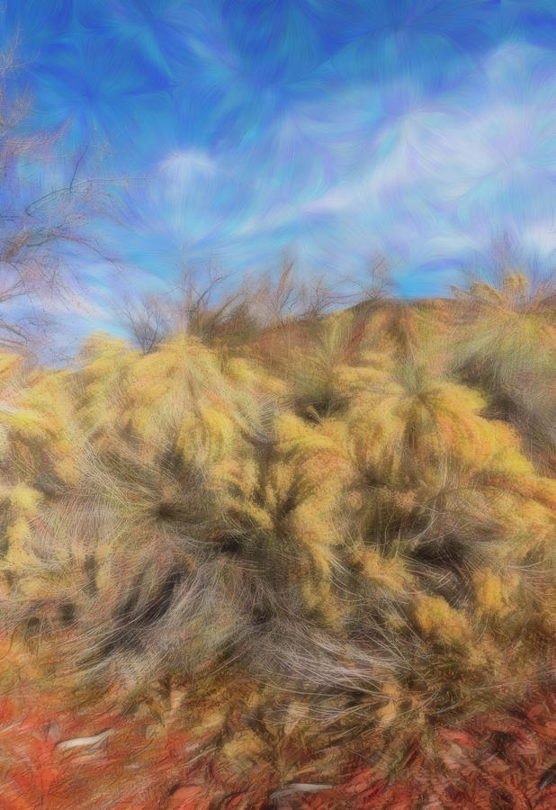 Rabbitbrush in Winter by Barbara Rogers