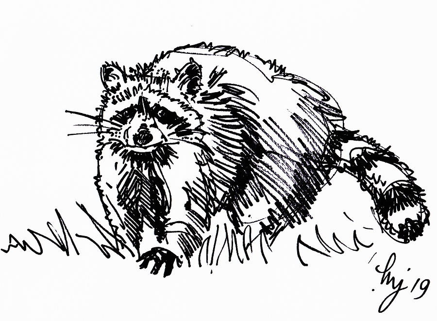 Raccoon drawing illustration black and white by Mike Jory