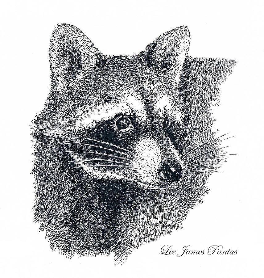 Raccoon Drawing - Raccoon by Lee Pantas