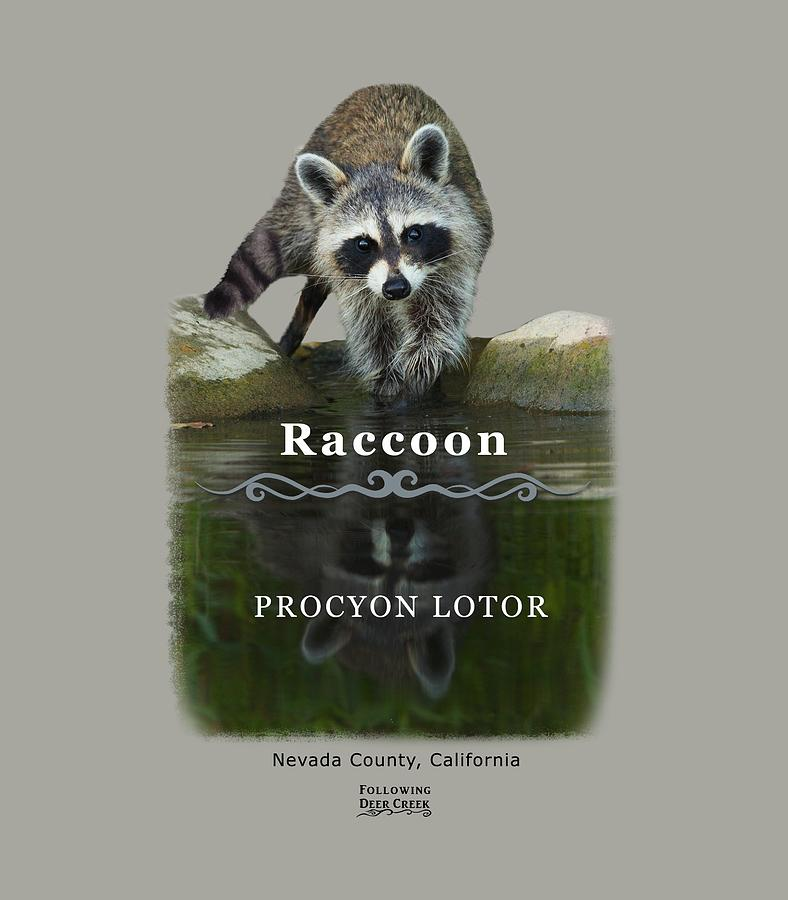 Racoon by Lisa Redfern