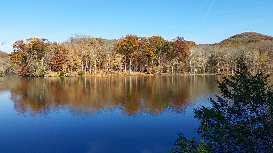 Radnor Lake Reflections  by Ally White
