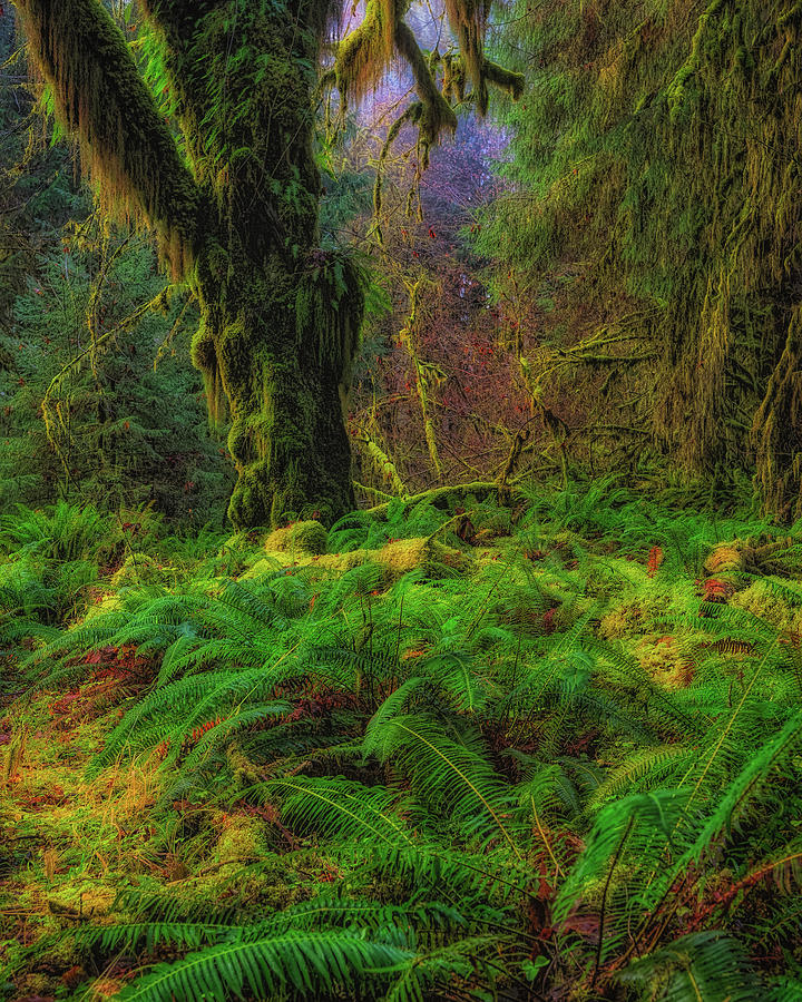 Rain Forest Glow by Thomas Hall