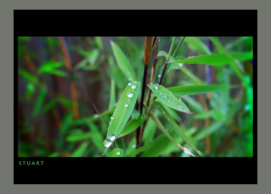 Rain On Bamboo Painting