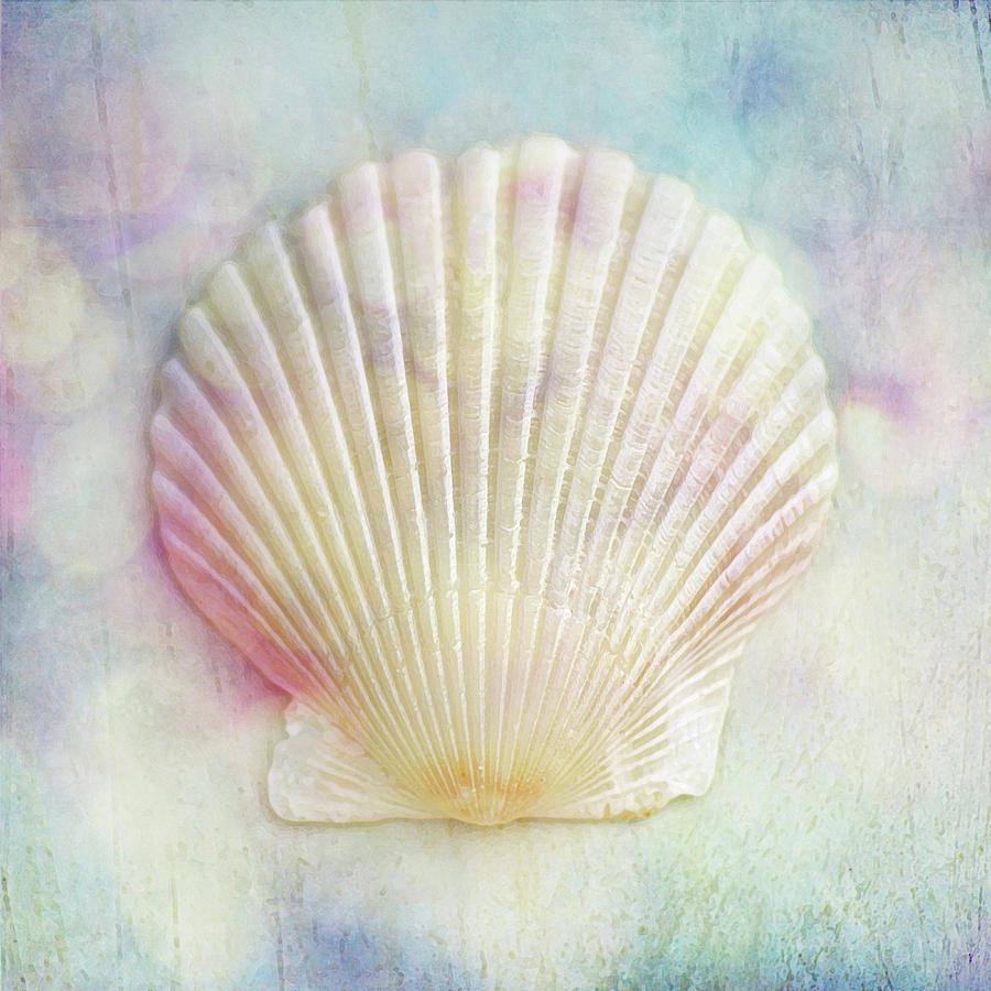 Rainbow Scallop Seashell by Kathi Mirto