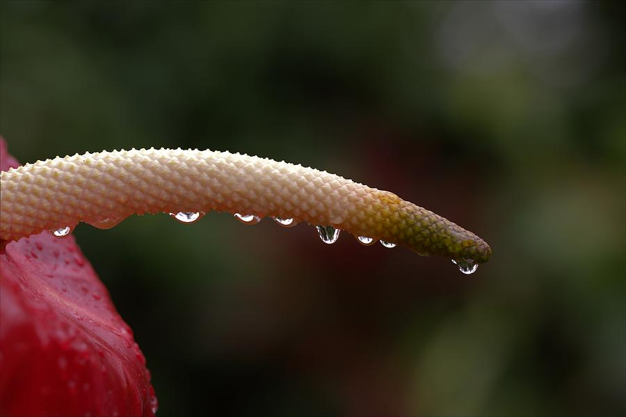 Raincatcher Photograph
