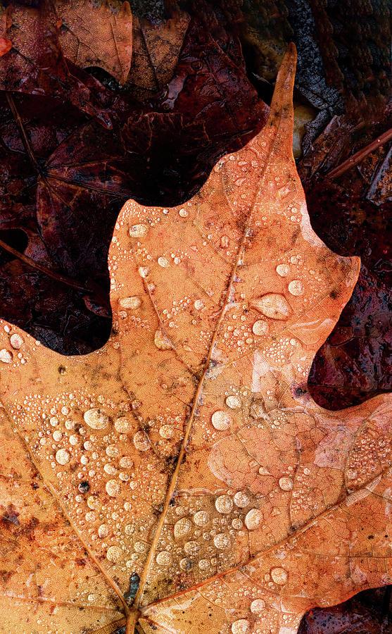 Raindrops On Autumn Leaf by Gary Slawsky