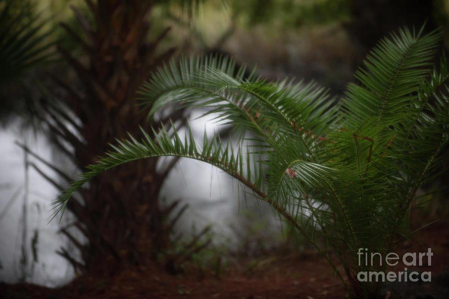 Rainy Day Palms Photograph