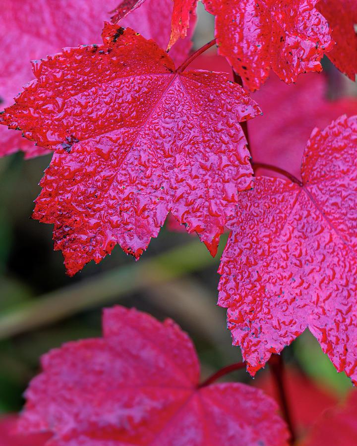 Rainy Red by Lauri Novak