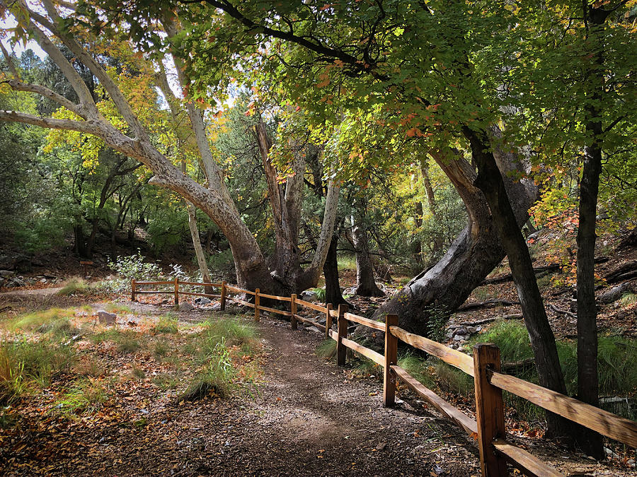 Ramsey Canyon with fence by Hershey Art Images