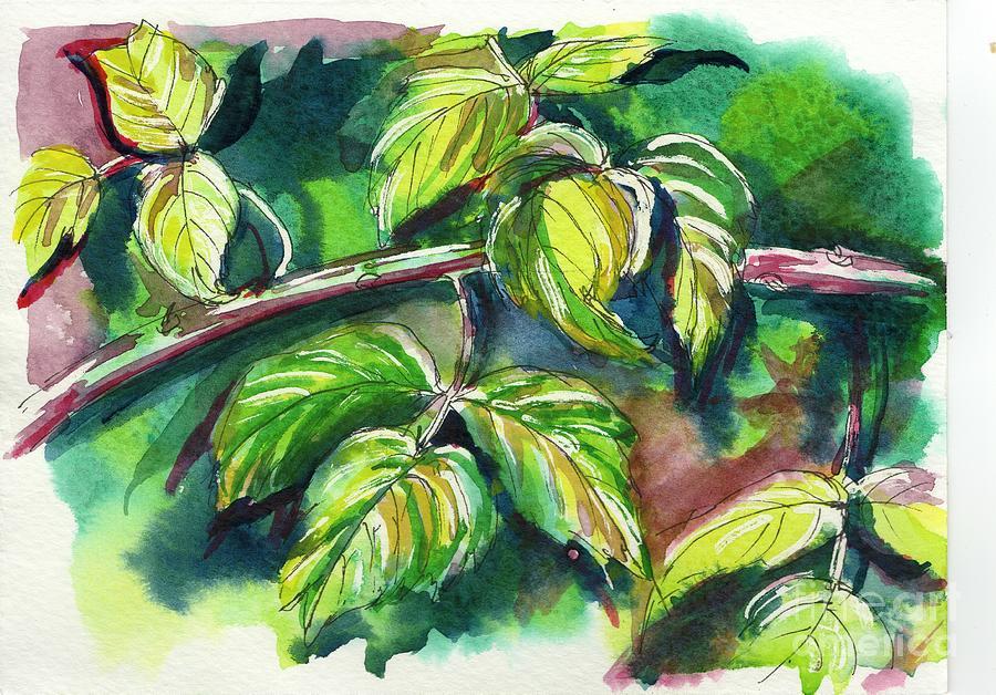 Raspberry Leaves by Tammy Nara