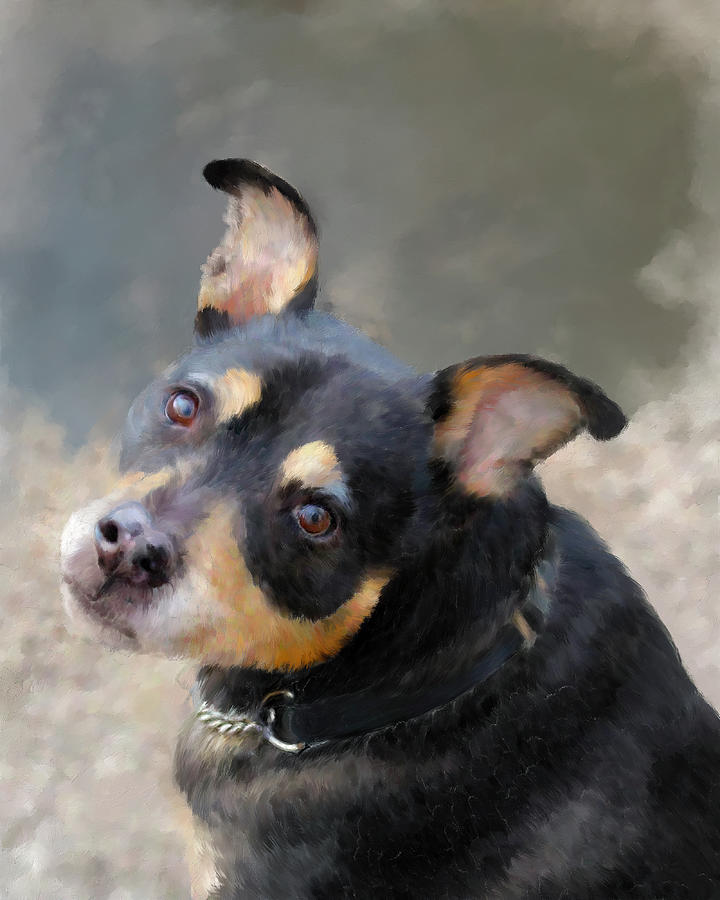 Rat Terrier by Portraits By NC
