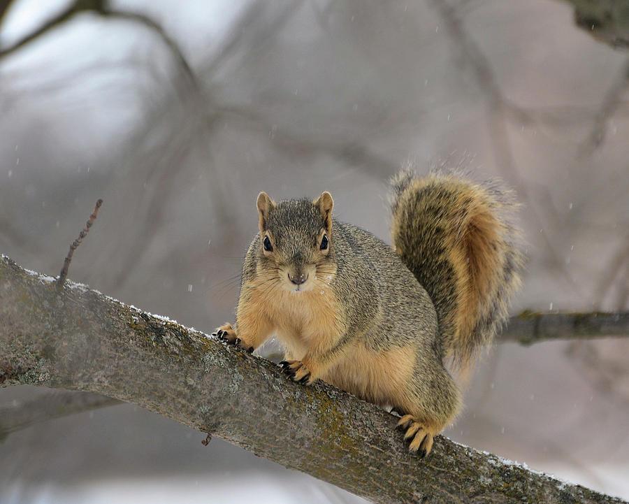 Ratatosk The Squirrel Photograph