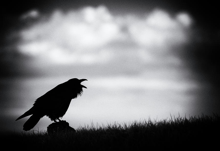 Raven Mood by Max Waugh