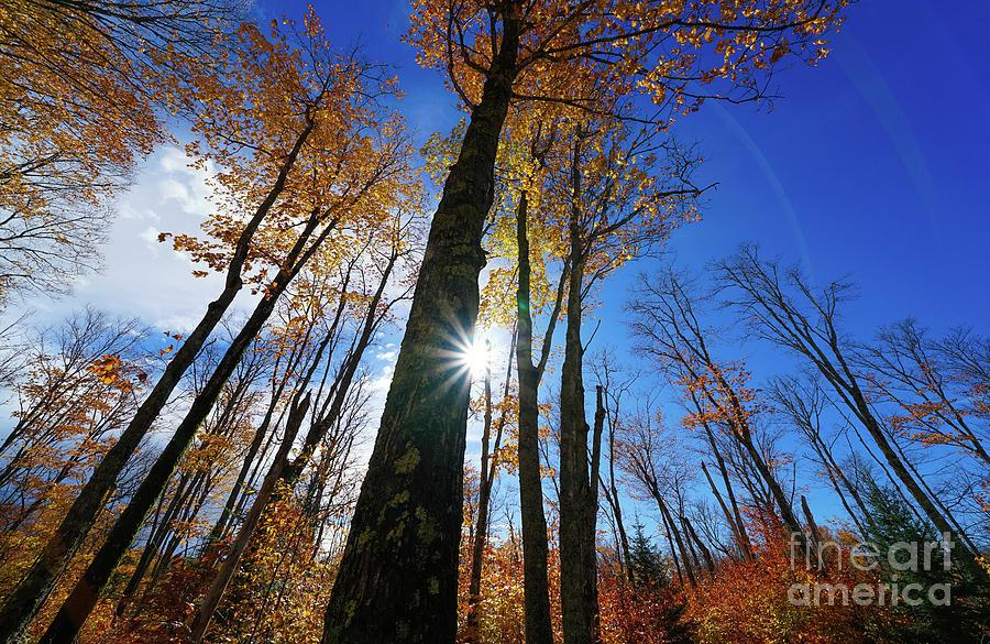 Rays Of An Autumn Sunburst Photograph