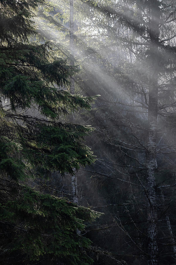 Sunrays Photograph - Rays of Sunshine by Randy Hall