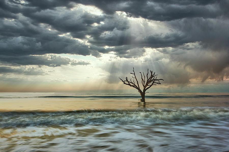 Rays over Botany Bay by Jon Glaser