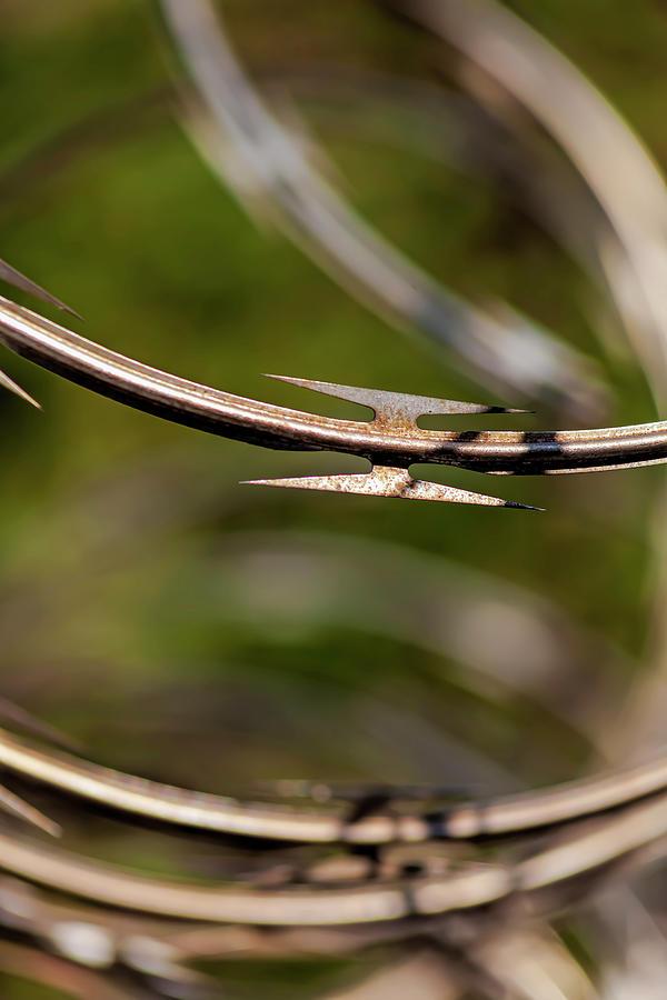 Razor Wire Photograph