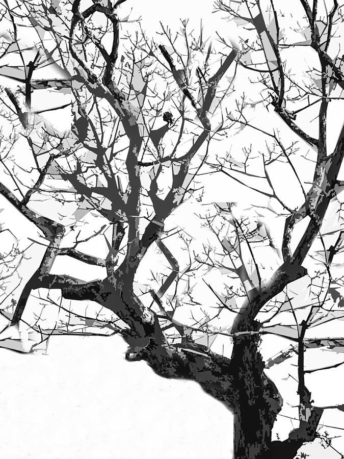 Reach for the Sky Photograph by Ali Bailey