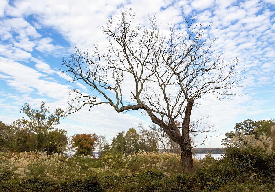 Reaching Skyward by Amy Sorvillo