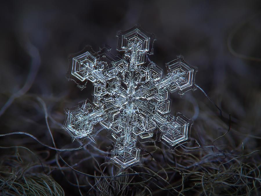 Real Snowflake 2013-01-21_1 Photograph