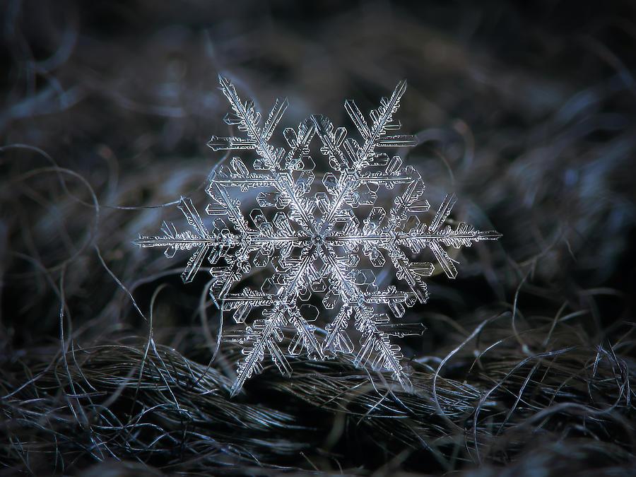 Real Snowflake 2014-12-26_1 Photograph