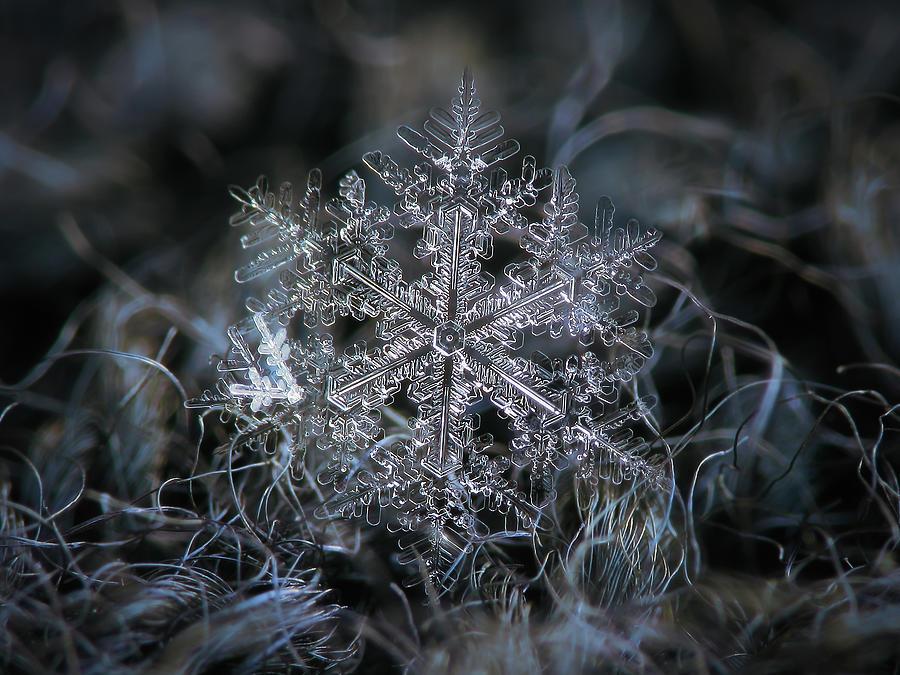 Real Snowflake 2014-12-26_2 Photograph