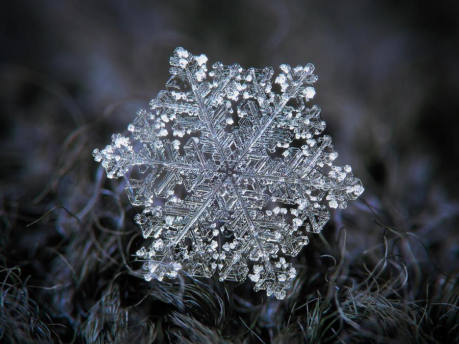 Real Snowflake 2018-12-26_2 Photograph