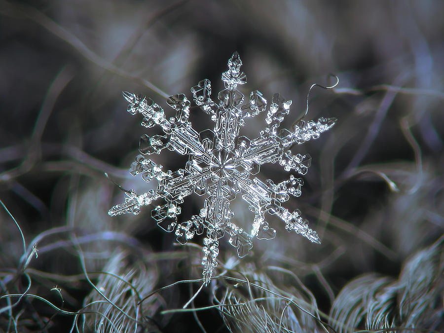Real Snowflake 2021-01-12_1 Photograph
