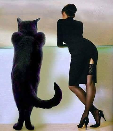 Cat Photograph - Recreation by Godwin E