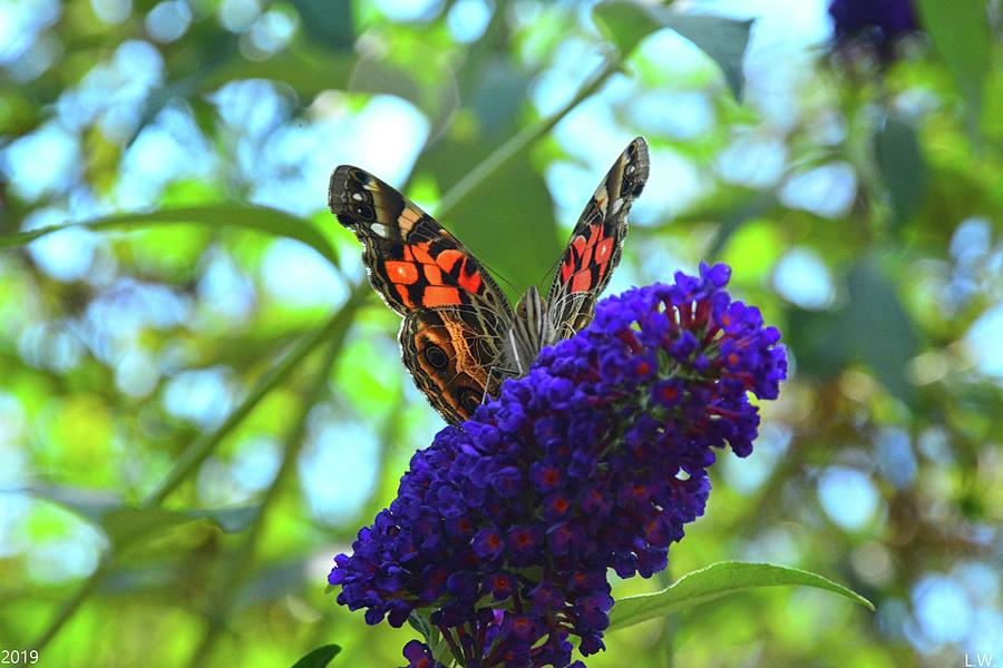 Red Admiral Butterfly 3 by Lisa Wooten