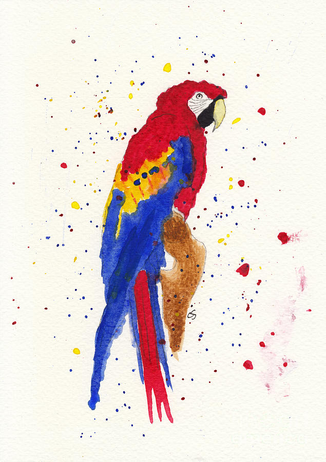 Red And Blue Macaw Mixed Media