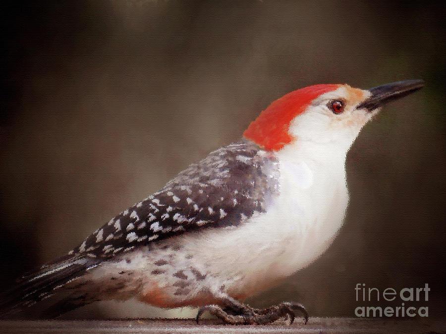 Red-bellied Woodpecker Portrait Painting