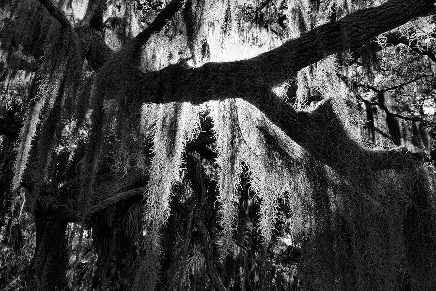 Red Bug Slough Moss by Robert Wilder Jr