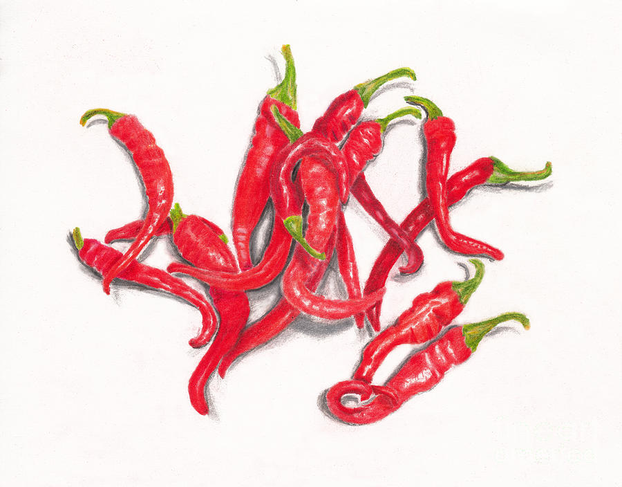 Red Cayenne Peppers From My Garden On White Drawing
