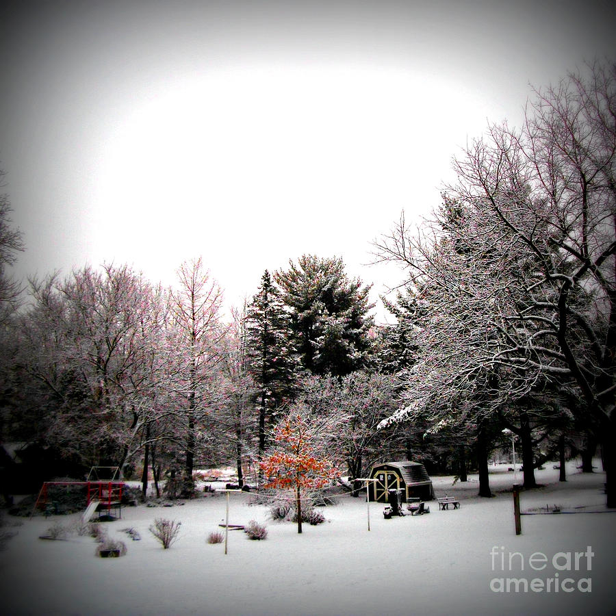 Weather Photograph - Red in the Wooded Winter by Frank J Casella
