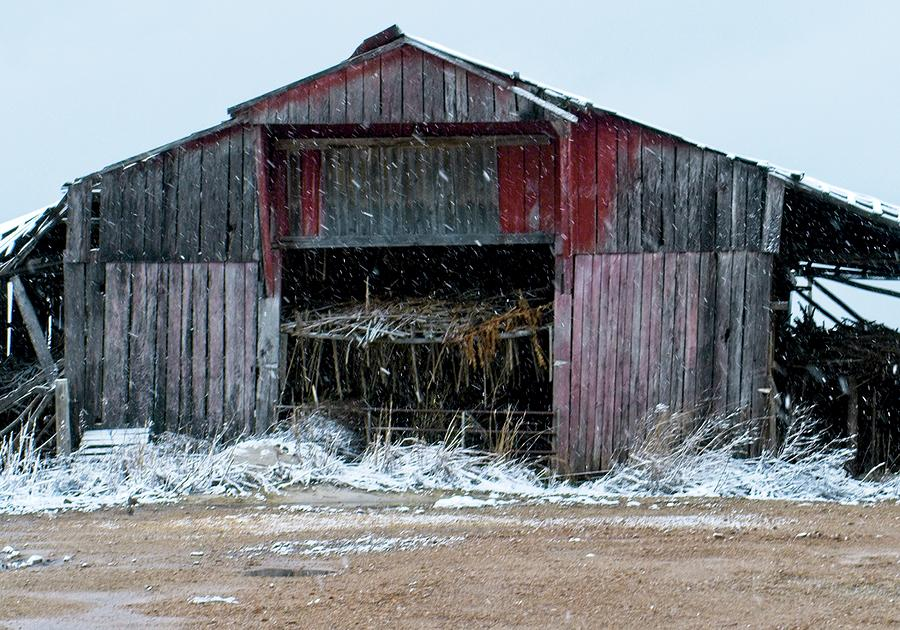 Red Lipped Barn Photograph