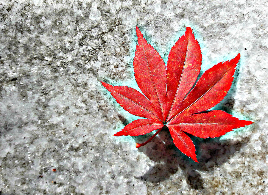 Red Maple on Marble by Tracy Ruckman